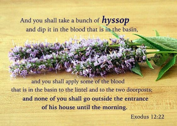 Hyssop Passover